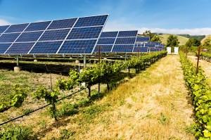солнечные батареи на винограднике